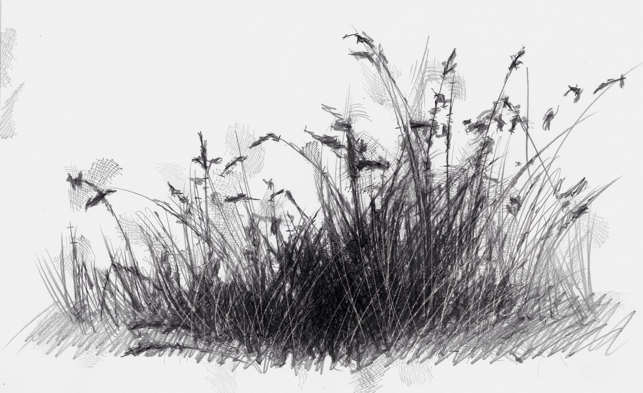 Трава картинки в карандашей