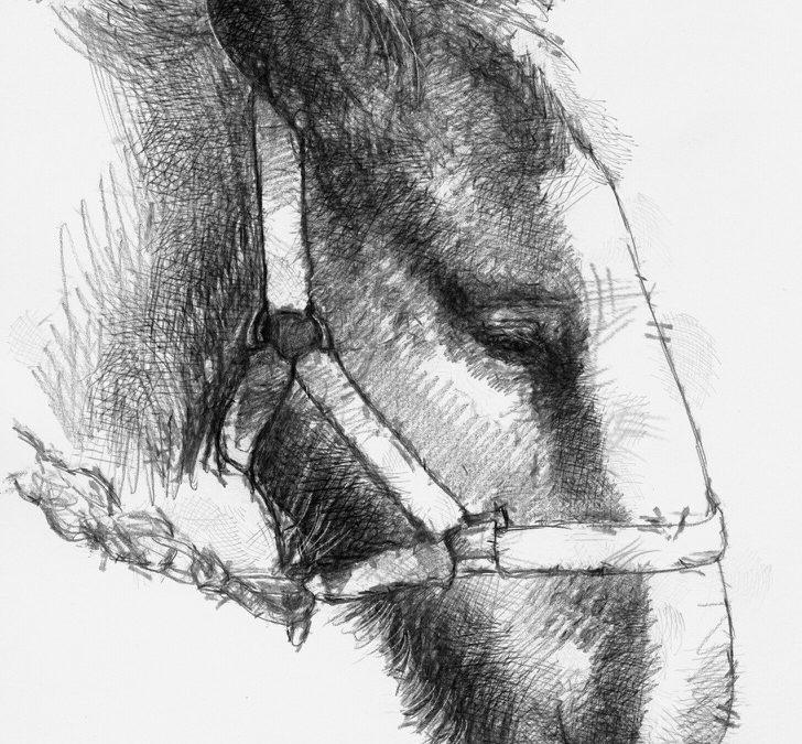 Shire foal