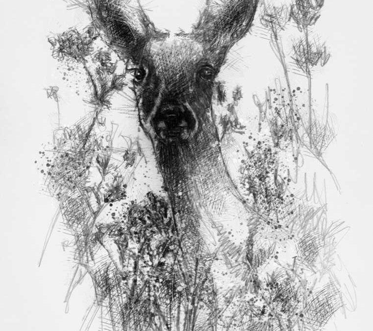 Deer here