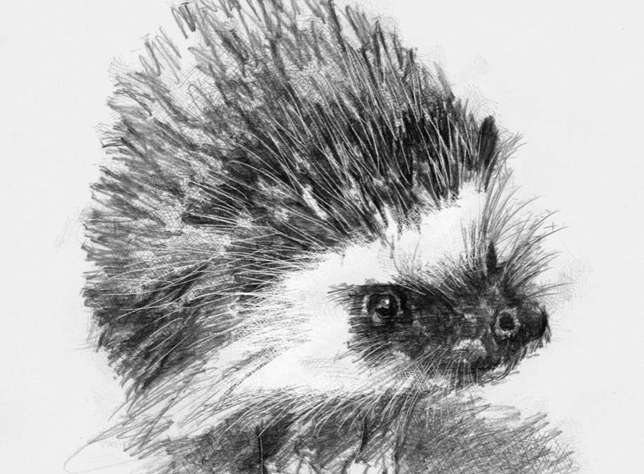 Another grumpy hedgehog