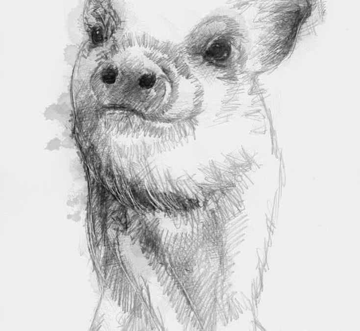 Happy piglet