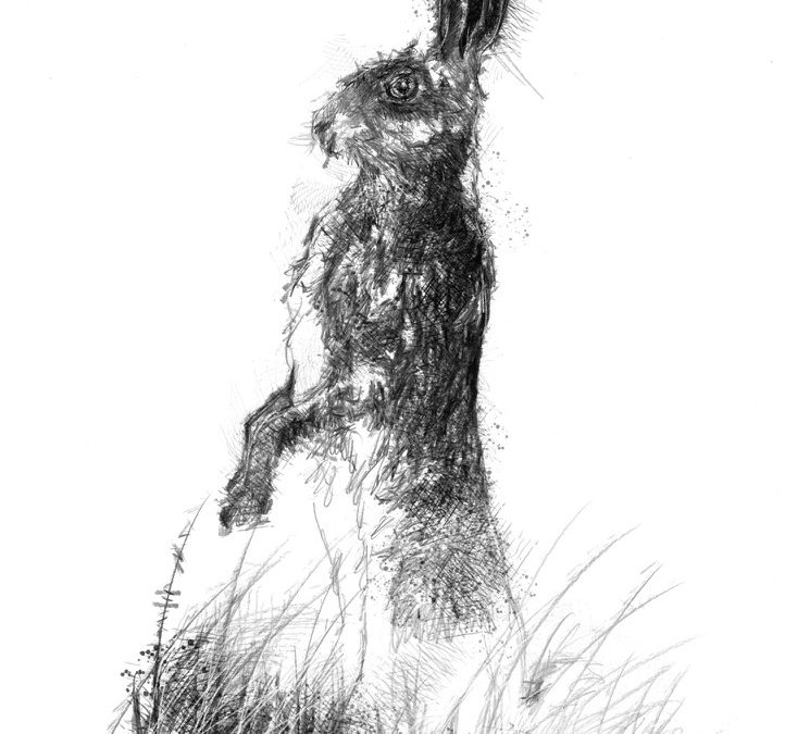 Tall hare