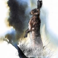 Brown hare standing