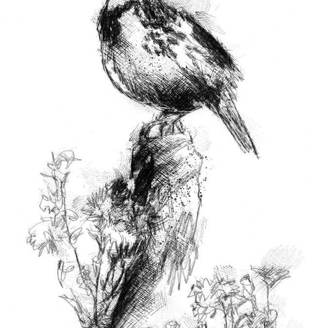 Meadow lark