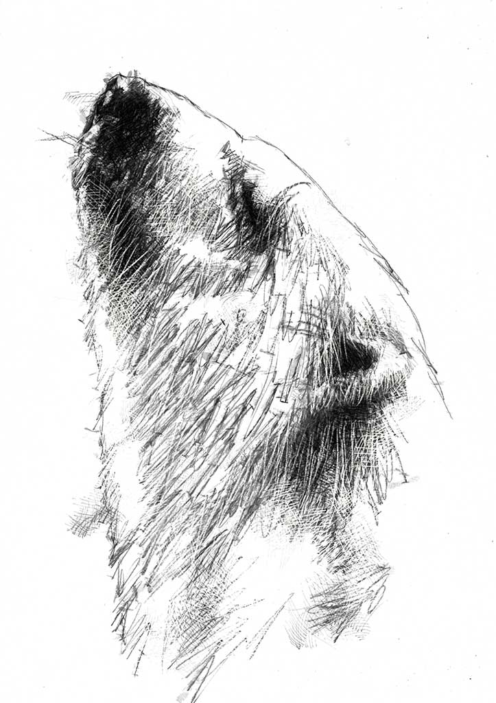 Artistic Drawing Of A Bear